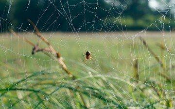 трава, природа, фон, паук, паутина