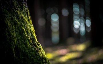 природа, дерево, блики, мох, ствол