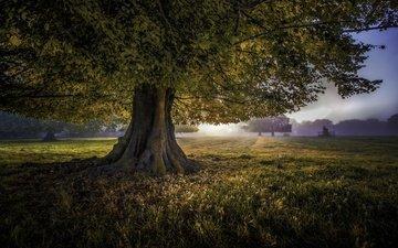 трава, деревья, природа, дерево, пейзаж, поле, листва, рассвет
