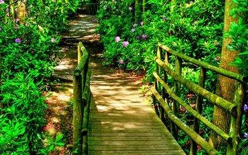 цветы, природа, кусты, лето, мост, мосты, рододендрон, сады