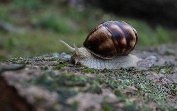 природа, макро, моллюск, улитка, слизень