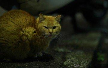 глаза, кот, усы, кошка, взгляд, рыжий кот, взгляд. ночь