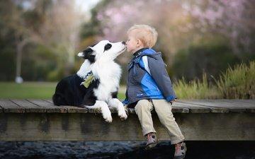 настроение, собака, дети, мальчик, поцелуй, друзья, бордер-колли