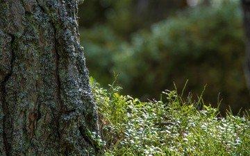 трава, природа, дерево, фон, ствол