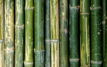 texture, green, bamboo, stems