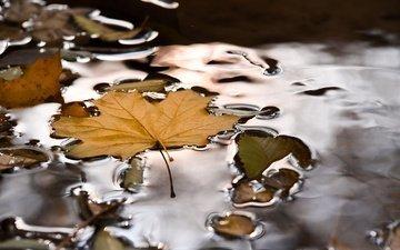 вода, природа, осень, лист, лужа