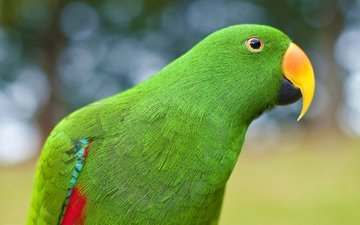 зелёный, птица, клюв, перья, попугай