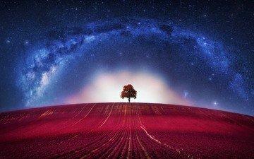 арт, дерево, космос, звезды, поле, графика, вселенная, млечный путь