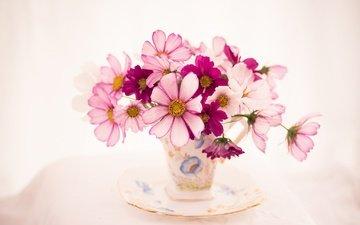 цветы, блюдце, букет, чашка, космея