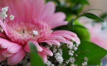 цветы, букет, герберы, гипсофила