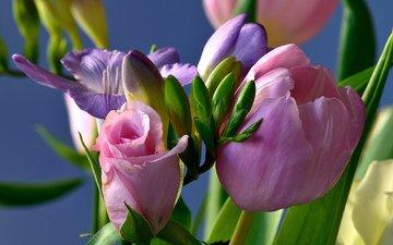 цветы, розы, букет, тюльпаны, ирисы, композиция