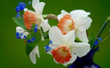 цветы, букет, ваза, незабудки, нарцисы