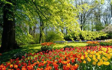 цветы, деревья, лес, парк, поляна, тюльпаны