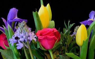 цветы, макро, розы, черный фон, букет, тюльпаны, ирисы, композиция