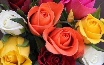 цветы, розы, букет, флора