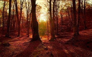деревья, лес, листва, осень
