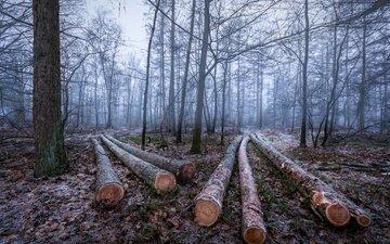 деревья, лес, зима, иней, бревна