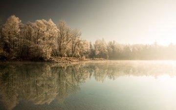 деревья, озеро, лес, зима, туман