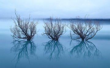 деревья, озеро, отражение, ветки