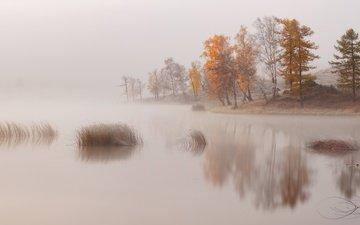 деревья, озеро, река, берег, туман, дымка