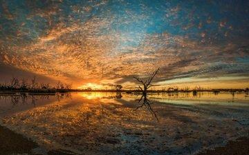 деревья, река, природа, закат, пейзаж, ветки, горизонт