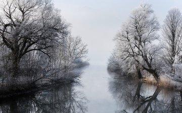 деревья, река, зима, туман, ветки