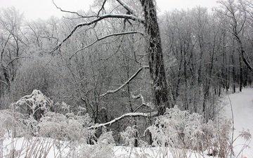 деревья, снег, лес, зима, ветки, мороз