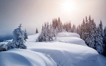 деревья, снег, зима, ели, сугробы