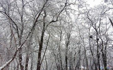 деревья, снег, зима, ветки, чёрно-белое
