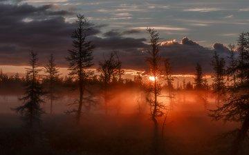 деревья, восход, солнце, лучи, туман, зарево, сумрак