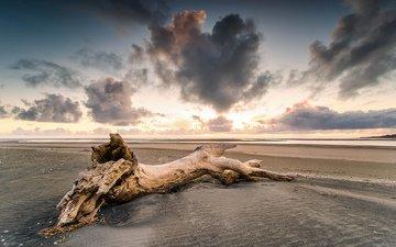 дерево, берег, закат, песок, пляж
