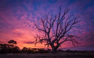 дерево, закат, сумерки, заря