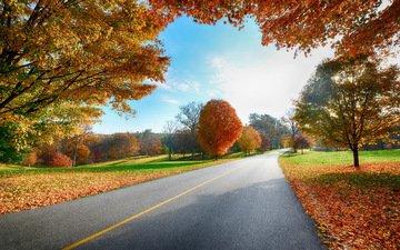 небо, дорога, деревья, листья, пейзаж, осень, деревь