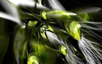природа, растения, фон, цветок, капли, перья
