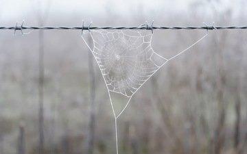 природа, фон, проволока, забор, паутина