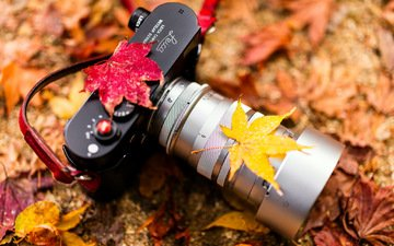 leaves, autumn, the camera, camera, lens, very