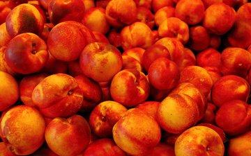 fruit, nectarine, nectarines