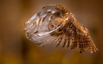 глаза, сова, полет, крылья, птица, перья