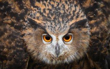 глаза, сова, смотрит, птица, клюв, перья