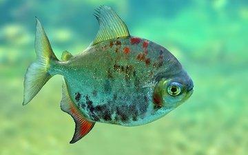 eyes, water, spot, fish, fins, underwater world