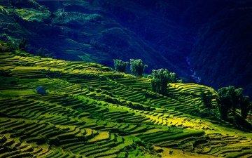 горы, поля, лето, вьетнам