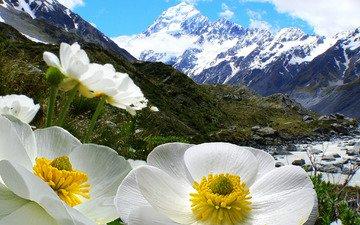 небо, цветы, облака, горы, снег, природа, лепестки, белые, снежные вершины, анемоны
