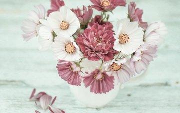 цветы, лепестки, букет, хризантема, космея