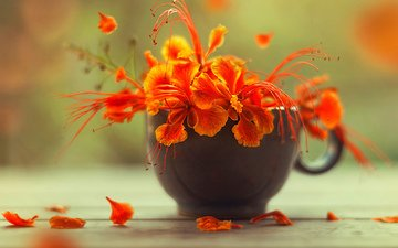 цветы, макро, цветок, лепестки, букет, чашка