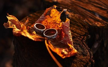 macro, autumn, sheet, maple, ring, wedding, stump