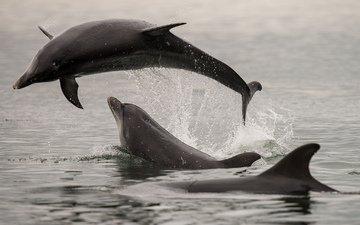 море, брызги, прыжок, дельфины