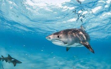 море, рыбы, океан, под водой, подводный мир, акулы