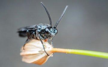 насекомое, цветок, усы, крупный план, лапки, муха