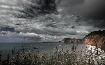небо, цветы, скалы, берег, тучи, море