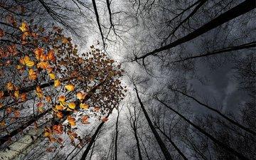 небо, деревья, лес, тучи, стволы, осень